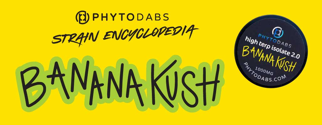 PhytoDabs Strain Encyclopedia- All About the Banana Kush Strain